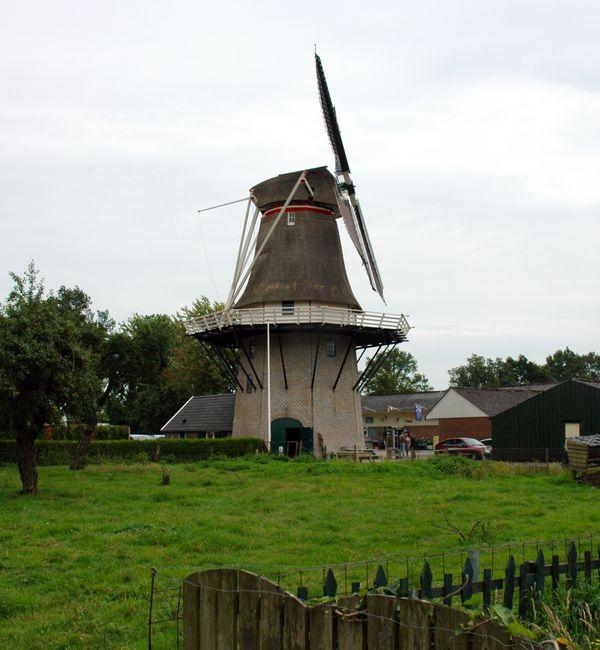 Vervallen windmolen werd florerende graanmolen en diervoederbedrijf