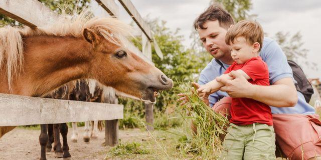 Kinderboerderijen Zwolle